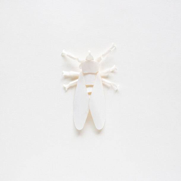 PAPER INSECT